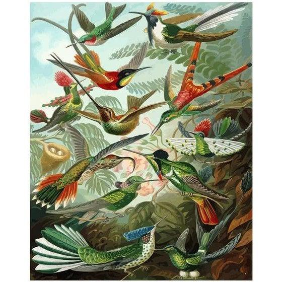 DIY Paint by Number kit for Adults on Canvas-Hummingbirds - Ernst Haeckel - 1904-Painting & Calligraphy
