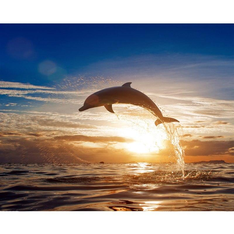 DIY Paint by Number kit for Adults on Canvas-Jumping Dolphin-40x50cm (16x20inches)
