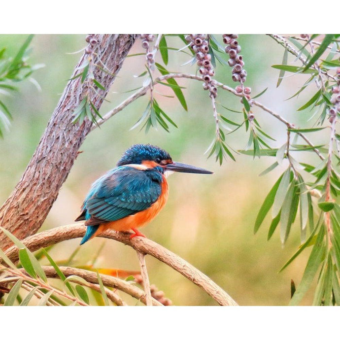Kingfisher Bird - Paint by Numbers Kit