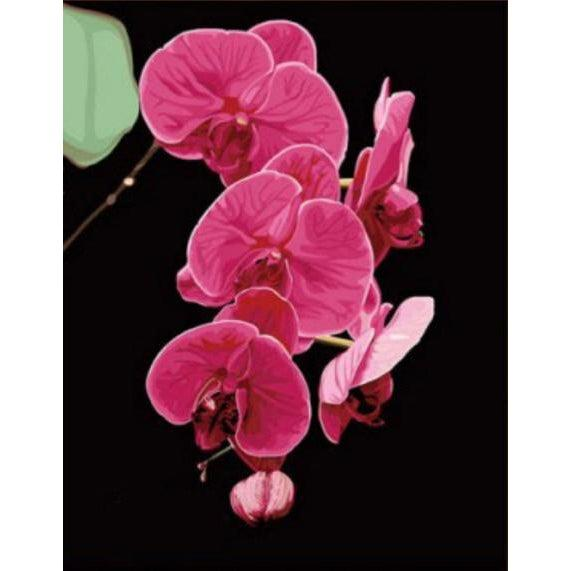 DIY Paint by Number kit for Adults on Canvas-Pink Orchids-40x50cm (16x20inches)
