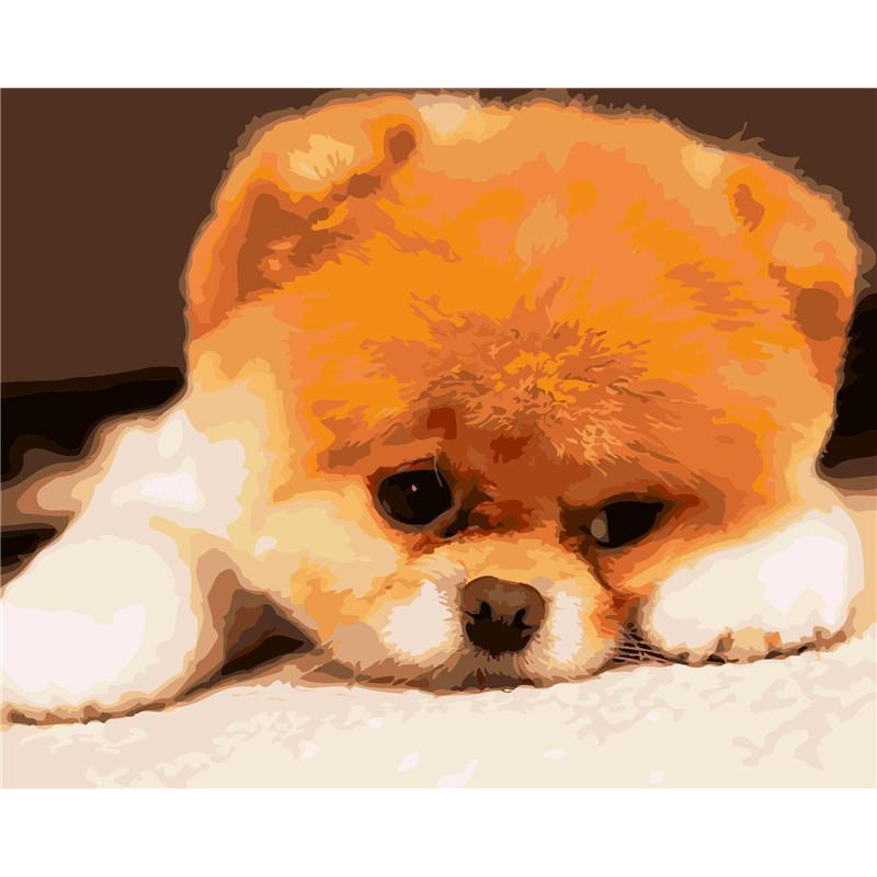 DIY Paint by Number kit for Adults on Canvas-Poofy Head Pomeranian-40x50cm (16x20inches)