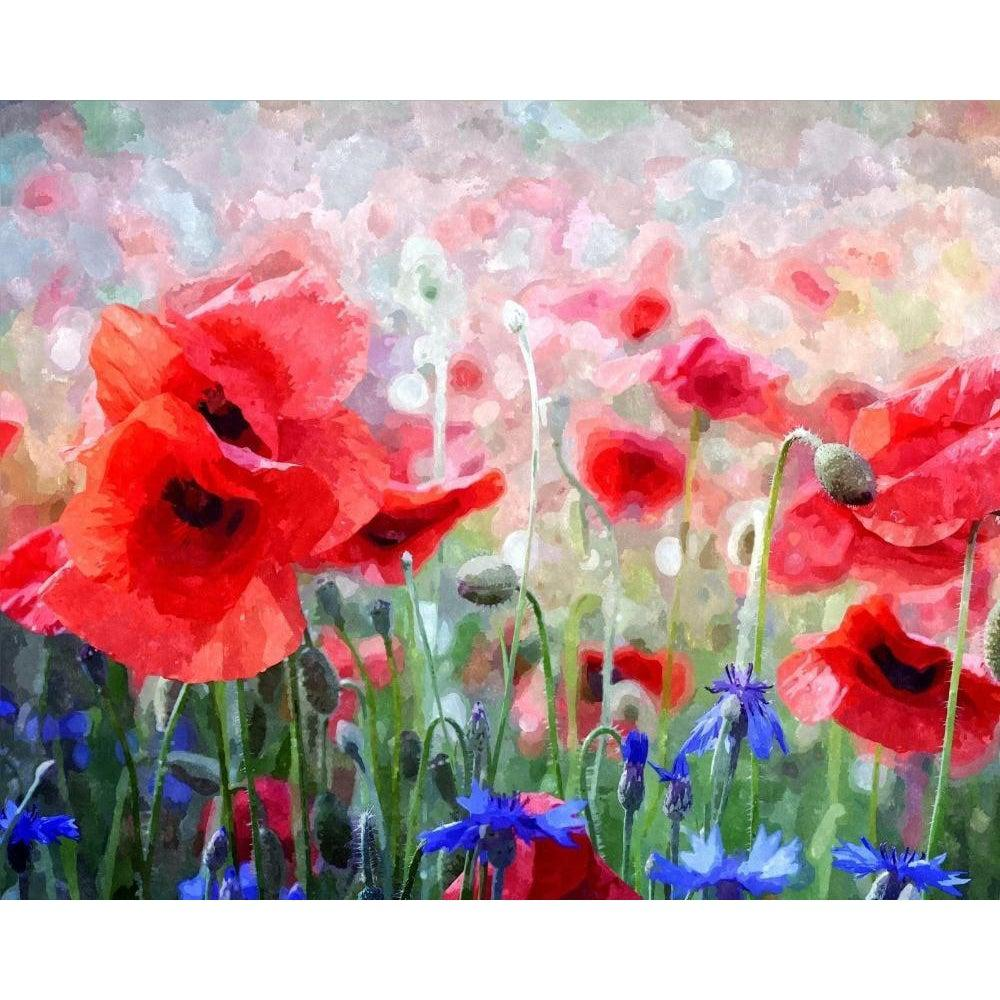 DIY Paint by Number kit for Adults on Canvas-Red Poppies and Blue Cornflowers-