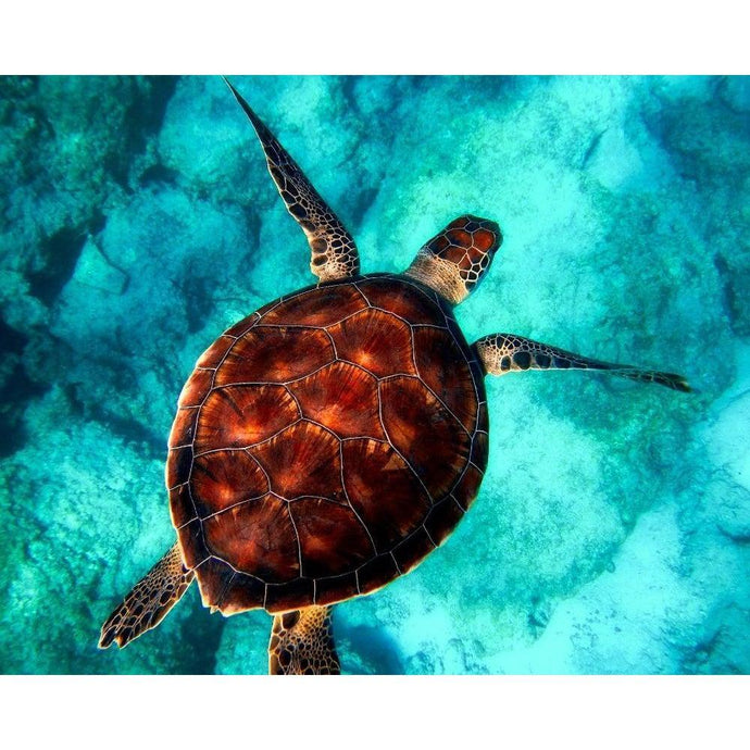 DIY Paint by Number kit for Adults on Canvas-Sea Turtle-Clean PBN