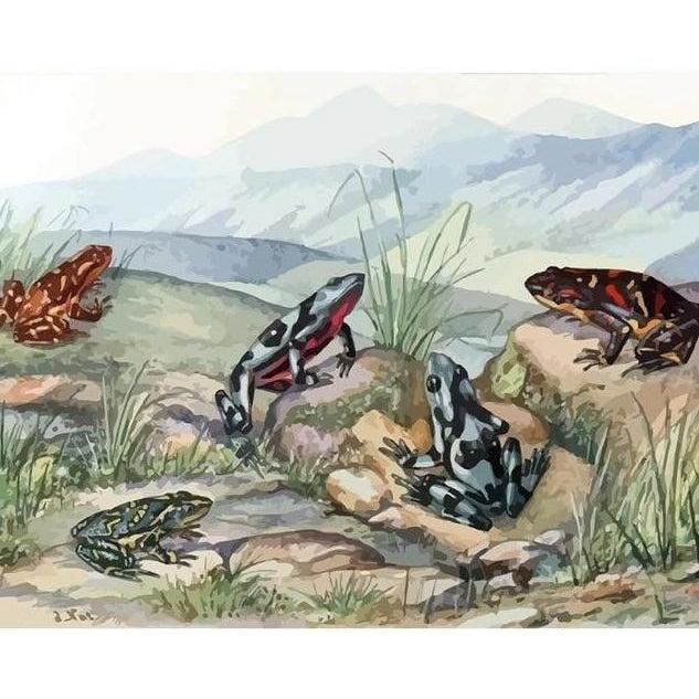 Sunbathing Frogs - Paint by Numbers Kit