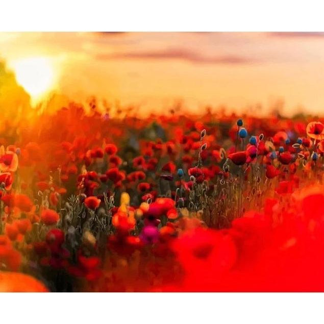 DIY Paint by Number kit for Adults on Canvas-Sunset Poppy Field-Painting & Calligraphy