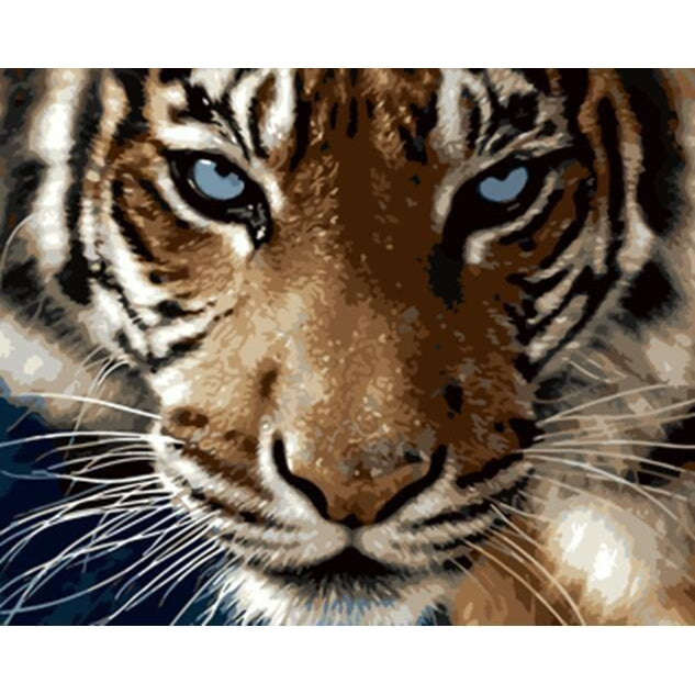 DIY Paint by Number kit for Adults on Canvas-Tiger Glare-40x50cm (16x20inches)