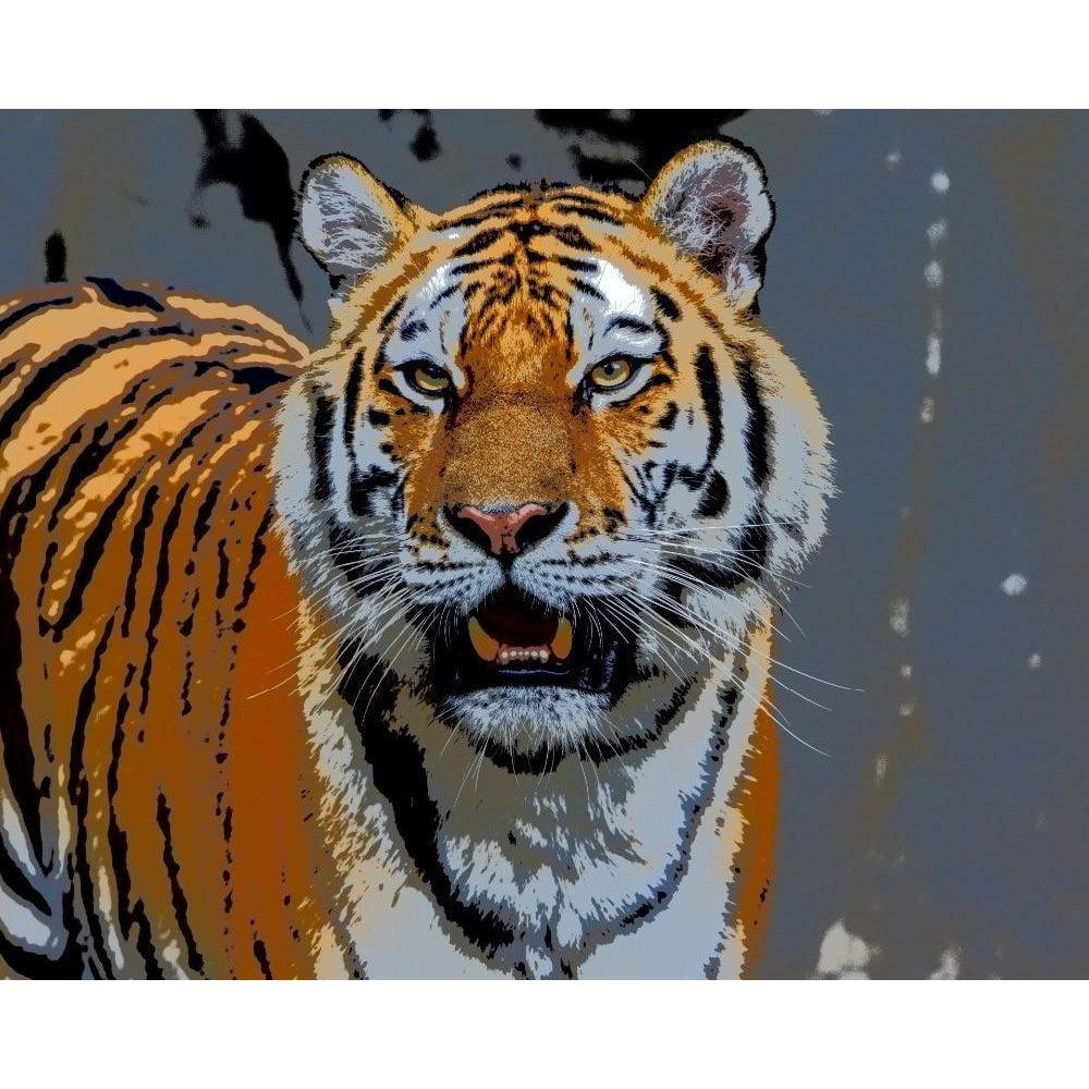 DIY Paint by Number kit for Adults on Canvas-Tiger Glare-Clean PBN