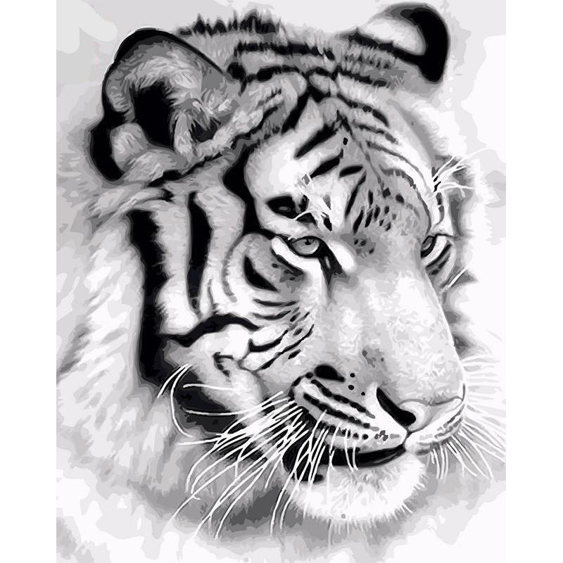 DIY Paint by Number kit for Adults on Canvas-White Tiger-40x50cm (16x20inches)