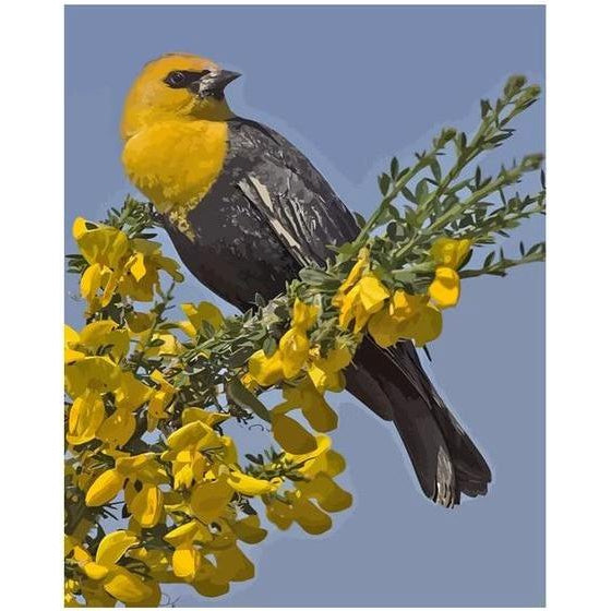 DIY Paint by Number kit for Adults on Canvas-Yellow Headed Blackbird-Painting & Calligraphy