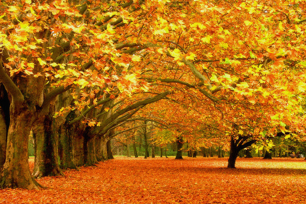 Landscape Nature Trees Autumn Poster