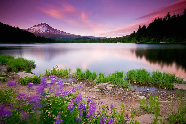 Landscape Nature Lake Sunset Flowers Mountains Poster