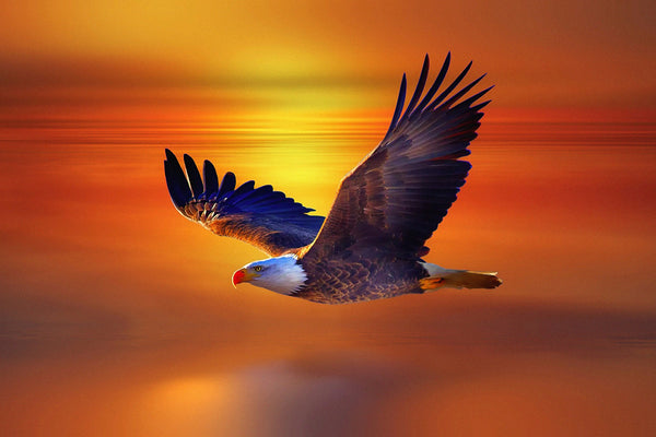 Bald Eagle Big Poster