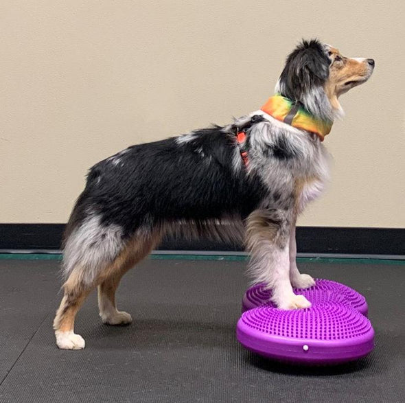 TwinDisc by FitPAWS-Store For The Dogs