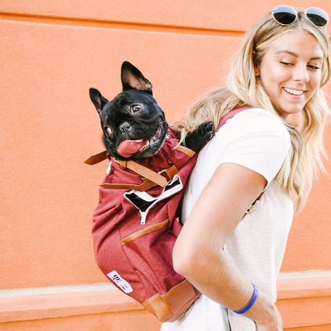 K9 Sport Sack Urban - Dog Carrier