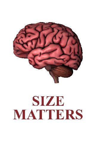 Human Brain Size Matters 11inx17in Mini Art Poster