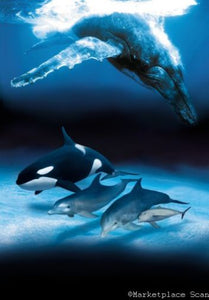 (24inx36in ) Dolphins And Whales Poster Print art