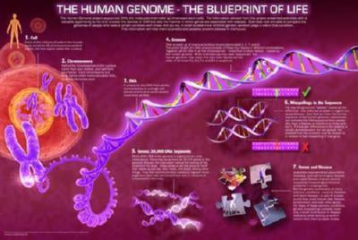 Human Genome poster| theposterdepot.com