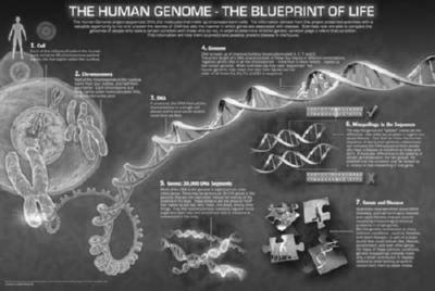 Human Genome black and white poster