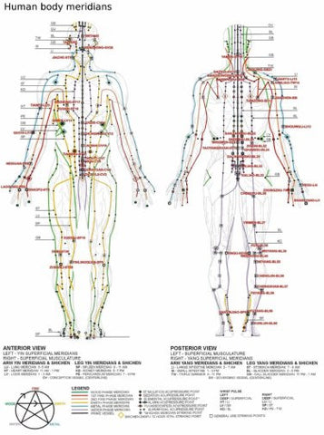 acupuncture human body meridians Mini Poster 11inx17in poster