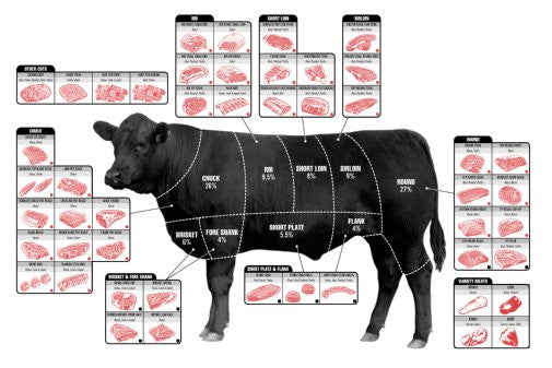 Beef Cuts Of Meat Butcher Chart cattle diagram Mini Poster 11inx17in poster