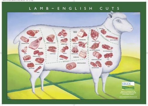 Lamb Cuts Illustration Chart poster 27x40| theposterdepot.com