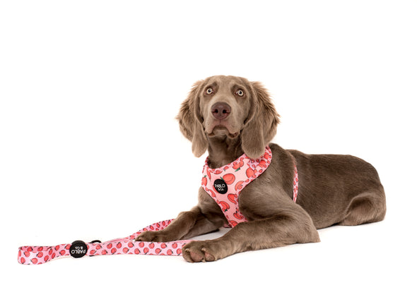 Peachy: Adjustable Harness