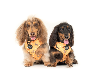 Dachshund Crew: Adjustable Harness