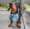 The Sausage Sizzle - Bandana