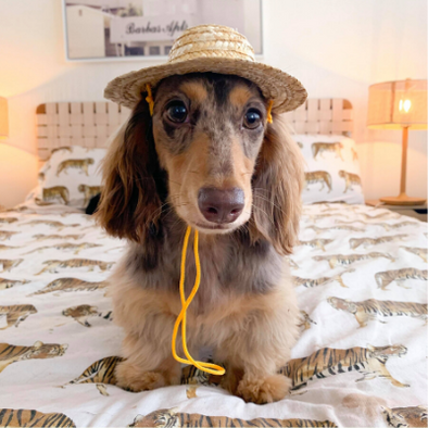 Pet Straw Hat