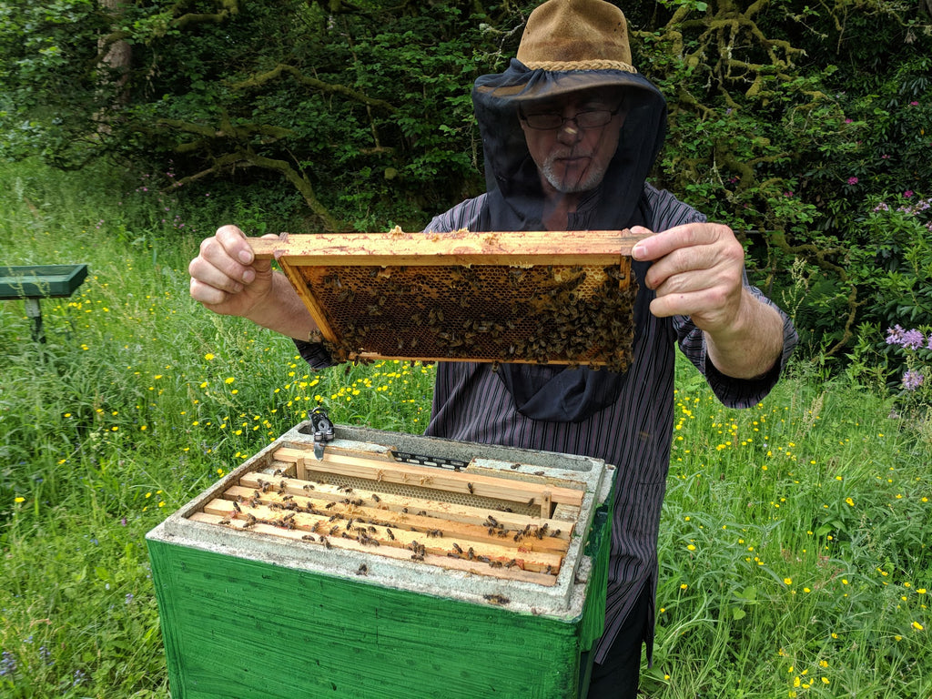 Phil Chandler inspecting a beehive frame.