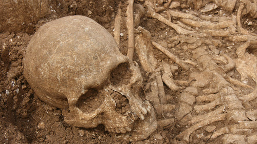 Viking skull in Dorset