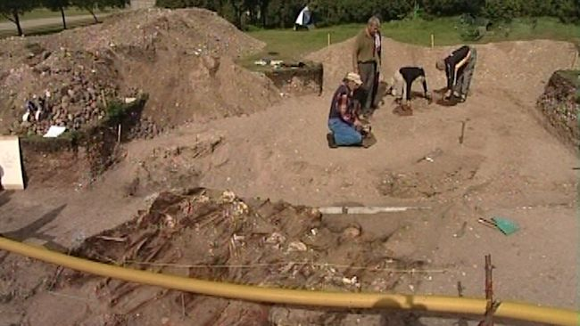 Archaeologists working with the Viking remains of Viking warriors buried within the Salme Viking ship