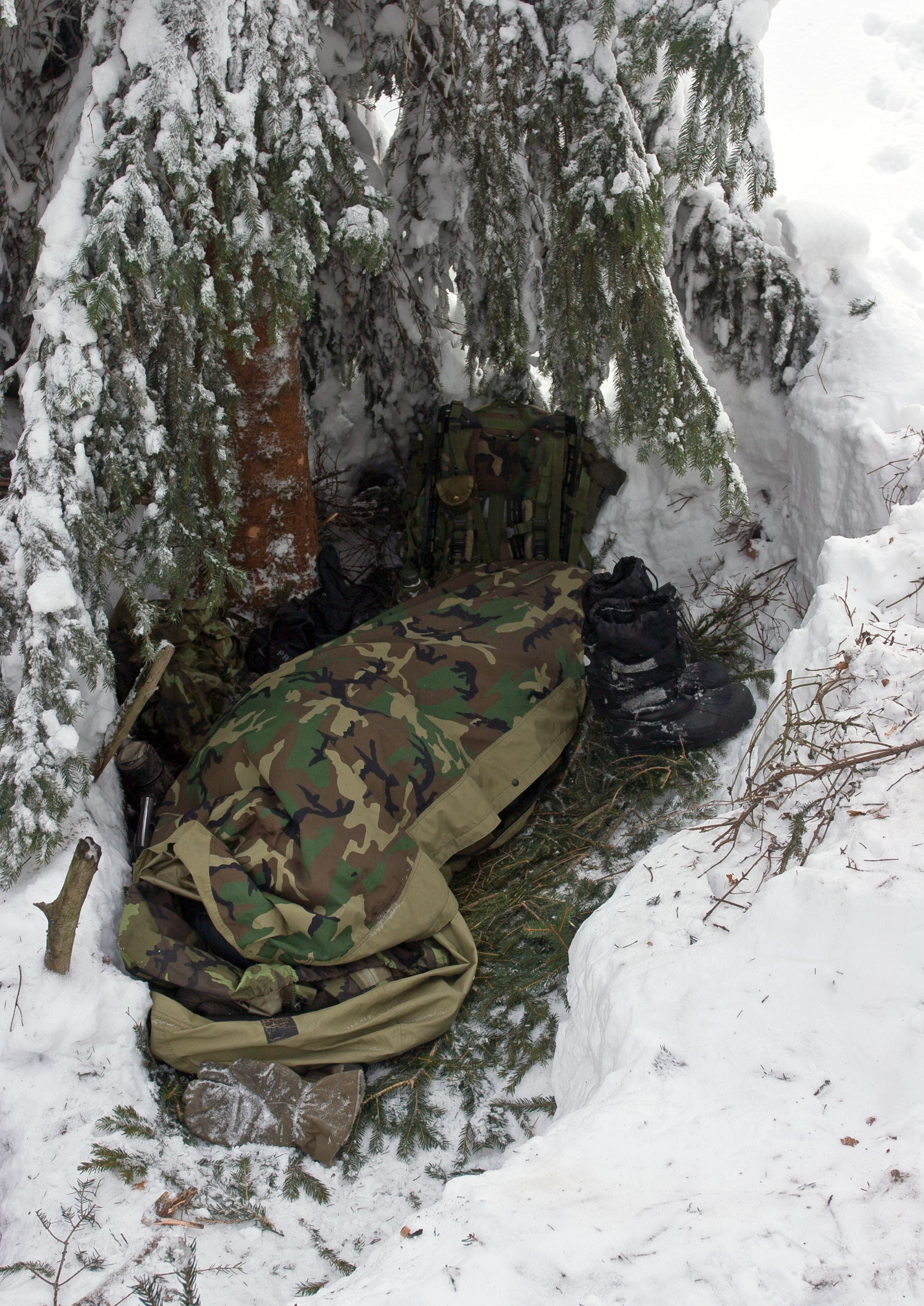 Survival shelter using a spruce tree in the winter time