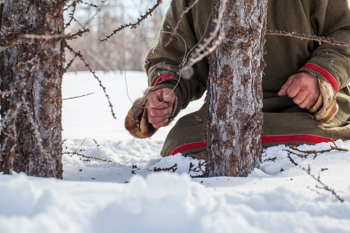 Setting a tripwire harness animal trap on two trees in a forest during the winter