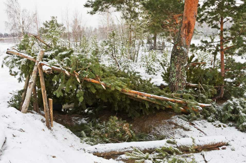 An outdoor shelter made out of spruce trees in a winter forest