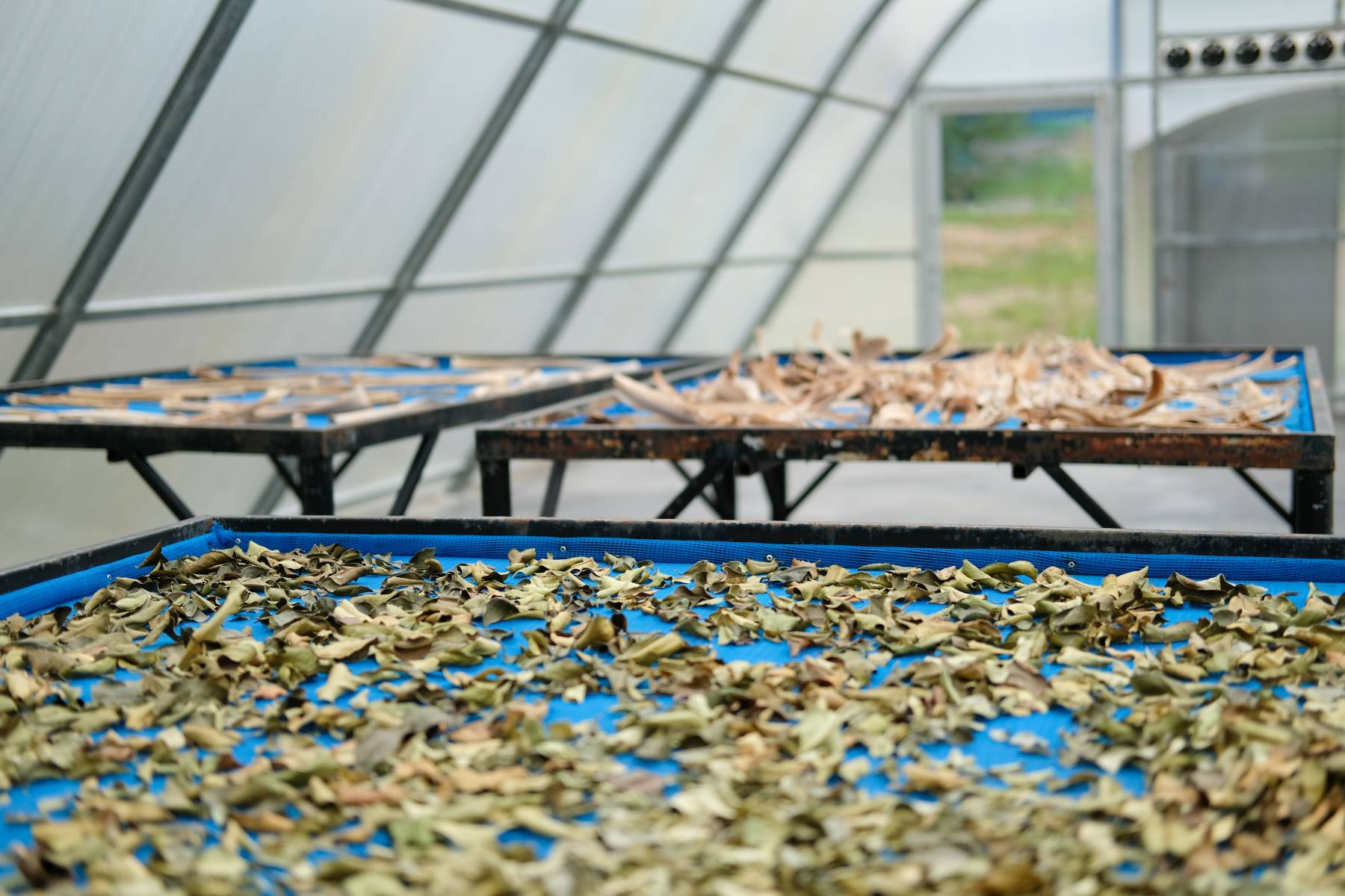 sun drying foods in a green house