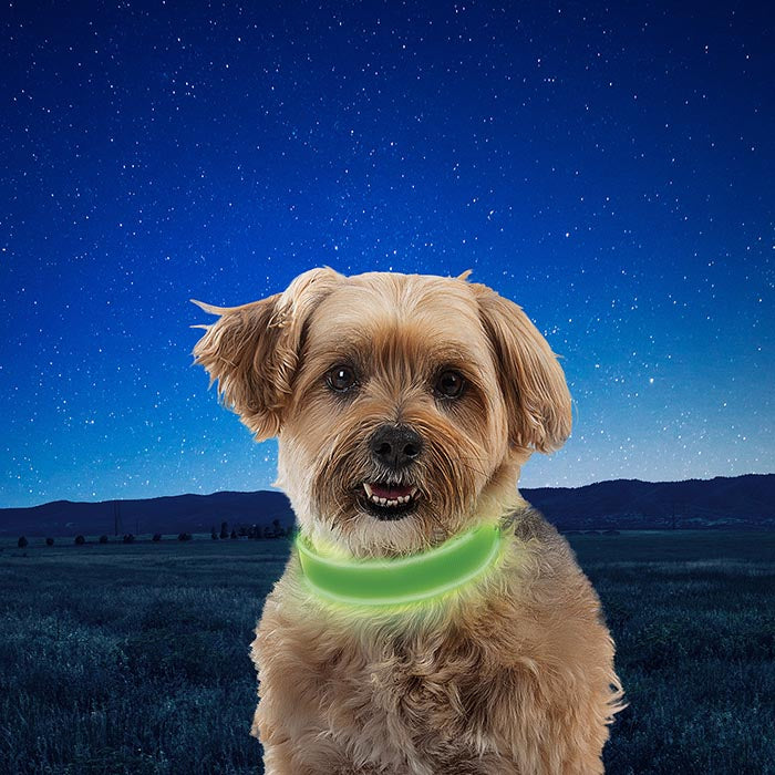 A small puppy wearing a green Nite-Ize LED Dog Collar with a grassy field and dark star lit sky in the background.
