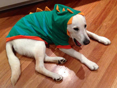 photo of buddy the labrador in a dinosaur onesie laying on the floor