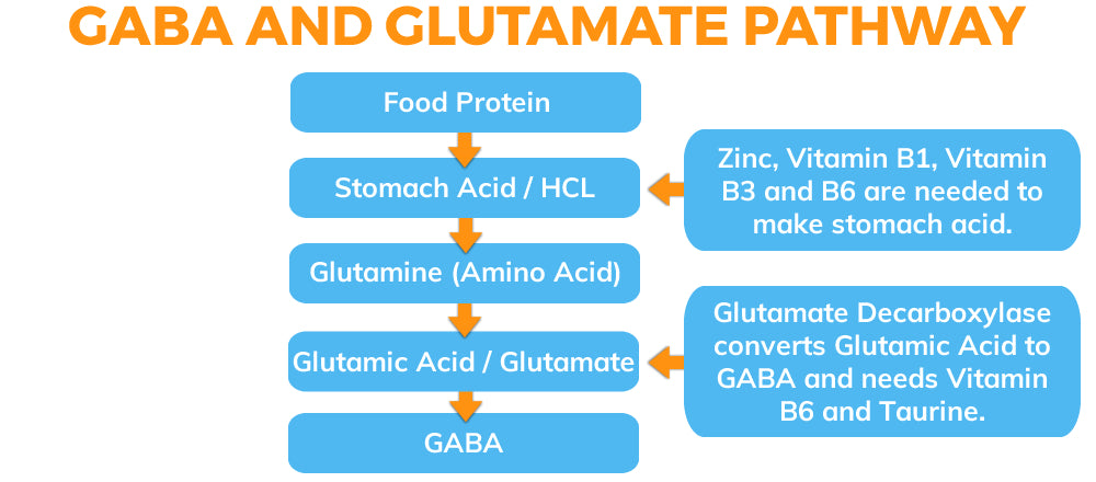 GABA and Glutamate Pathways