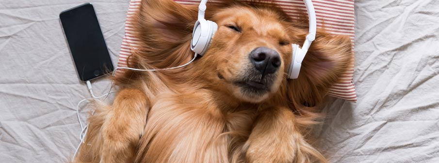 Sleep Music - Why Some Sounds Help Us to Sleep