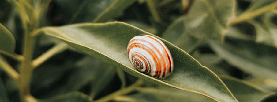 How long does a snail sleep?