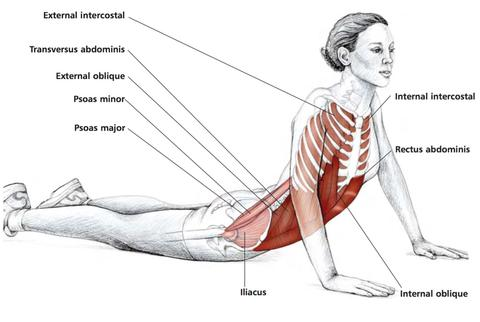 Abdominal Stretches – Stuart Hinds Performance Therapy Internal Oblique Stretching