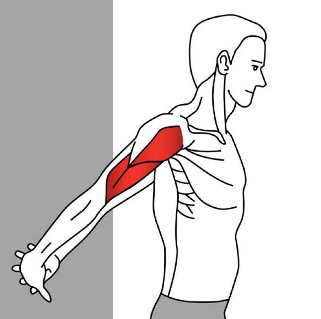 Stretching for Pain Relief - Anterior Deltoid