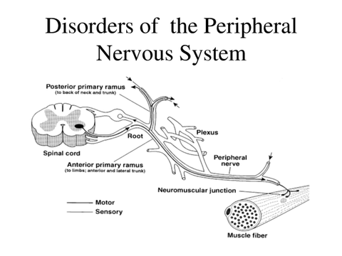 disorders of the peripheral nervous system diagram