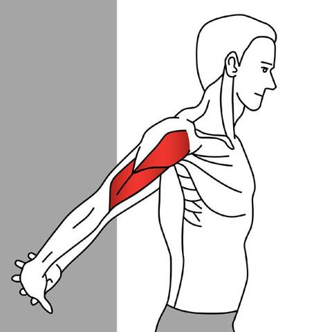 Biceps brachii stretch diagram