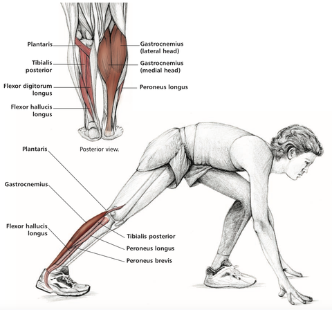 diagram of the calf muscle stretch