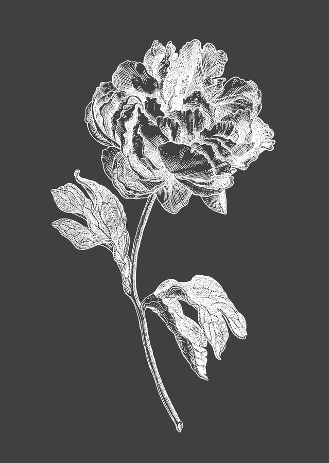 Peony - White On Grey