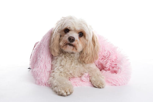 Dog's love to cuddle into the soft interior of these luxurious shaggy blanket pods in gorgeous pink
