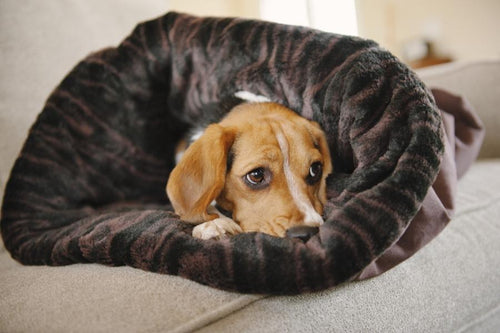 P.L.A.Y.'s Snuggle convertible bed in truffle brown dog bed can be moulded into a variety of shapes