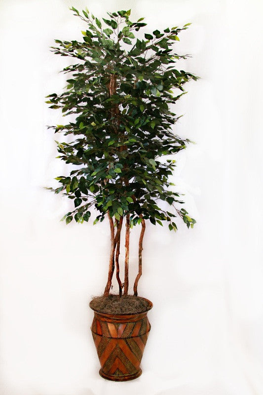 8' Giant Ficus Tree